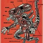 Xenomorph Anatomy